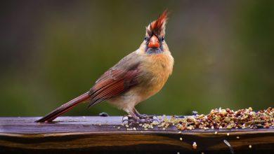 Photo of 10 Foods for Healthy Bird Fruit Mania California