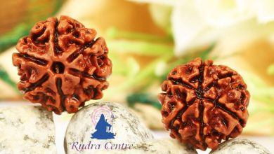 Photo of Significance of Rudraksha and It's Types