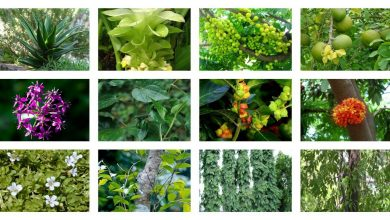 Photo of Top 4 Medicinal Plant (Herbs) In India – Keep Your Body Healthy